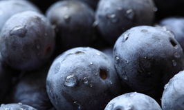 Blueberries up close Royalty Free Stock Images