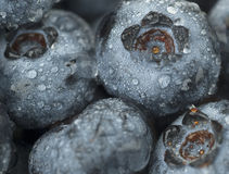 Blueberries, up close. Extreme close up on blueberries, lightly misted Royalty Free Stock Images