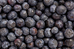 Blueberries (Vaccinium corymbosum) Royalty Free Stock Photo