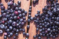 Blueberries Vaccinium corymbosum and Vaccinium myrtillus Stock Images