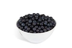 Blueberries (Vaccinium myrtillus) Stock Images