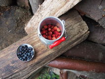 Blueberries Vaccinium myrtillus strawberries Stock Photos