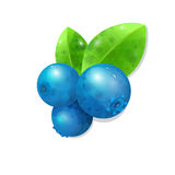Blueberries vector illustration  on white background. Berries and leaves with watercolor texture Royalty Free Stock Photo