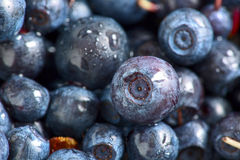 Blueberries with water drops Royalty Free Stock Photography