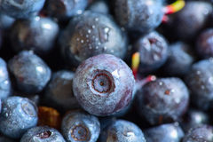 Blueberries with water drops Stock Photography
