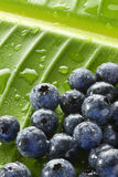 Blueberries Water Drops Leaf Background Stock Photography