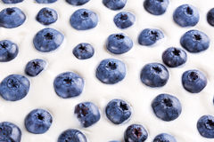 Blueberries in whipped cream Stock Photography