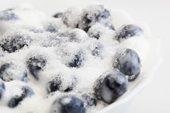 Blueberries whipped cream and sugar Stock Photo