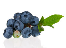 Blueberries on white Stock Photos