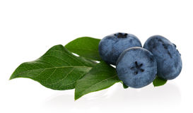 Blueberries on white Stock Image