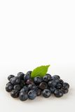 Blueberries  on a White Background Stock Photo