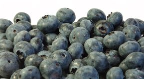 Blueberries at white background isolated. Blueberries at white background closup Stock Image