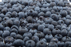 Blueberries on white background Royalty Free Stock Photo