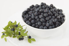 Blueberries in a white bowl on a white plate Royalty Free Stock Photo