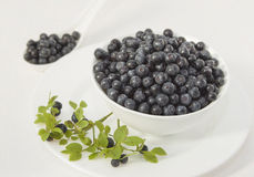 Blueberries in a white bowl on a white plate Royalty Free Stock Image
