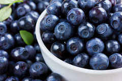 Blueberries in the white bowl Stock Photos