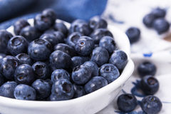 Blueberries in a white ceramic bowl Royalty Free Stock Image