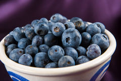 Blueberries in a white dish Stock Photography