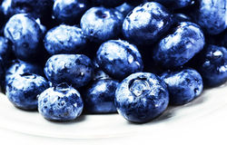Blueberries on white plate isolated on white background with cop Royalty Free Stock Images