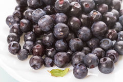 Blueberries on a white plate Royalty Free Stock Image