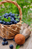 Blueberries in wicker basket and Leccinum mushroom Royalty Free Stock Images