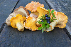 Blueberries and wild mushrooms Royalty Free Stock Image