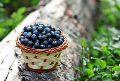 Blueberries from the wood Stock Photography