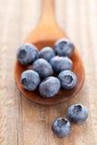 Blueberries in wooden scoop Stock Image