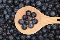 Blueberries on a wooden spoon Royalty Free Stock Photography
