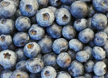 Blueberries in XXXL. Fresh organic blue berries in high reselution. Can be used as background.Blueberries are flowering plants of the genus Vaccinium royalty free stock image