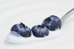 Blueberries and Yogurt on a Spoon Stock Photography