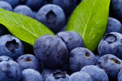 Blueberry. Macro Blueberry Background with Green Leaf royalty free stock photography