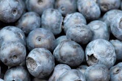 Blueberry stock image