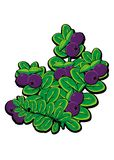 Blueberry. Sweet blueberry with green leaf stock illustration