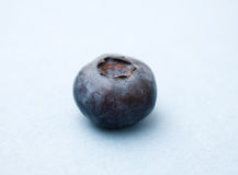Free Blueberry Royalty Free Stock Photography - 14201817