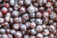 Blueberry Stock Photo