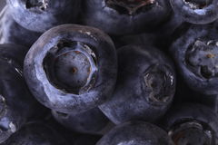 The blueberry Stock Images