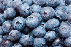 Blueberry Stock Images