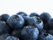 Blueberry. Fresh bluberries from local market on white background. Blueberries contain anthocyanins,  and various phytochemicals, which possibly have a role in Royalty Free Stock Photos