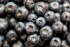Blueberry antioxidant organic superfood in a bowl concept for healthy eating and nutrition Royalty Free Stock Photography