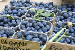 Blueberry antioxidant organic superfood in a bowl concept for he Stock Photo