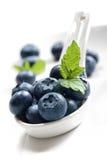 Blueberry royalty free stock image