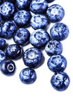 Blueberry antioxidant superfood isolated on white background  m Royalty Free Stock Image