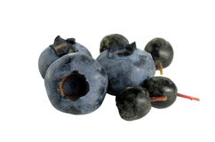 Blueberry and aronia Stock Photography