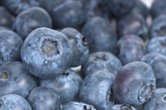 Blueberry as a background Royalty Free Stock Photo