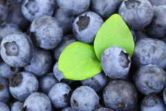 Blueberry Background. Fresh blueberry fruit background with green leaves Stock Photography