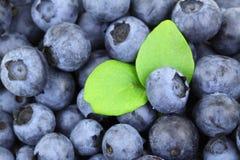 Blueberry Background Stock Photography