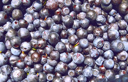 Blueberry background. Background from lots of fresh wet blueberries Stock Photography