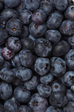 Blueberry background. A pile of blueberries shot from overhead stock photos