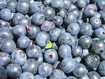 Blueberry background Stock Photos